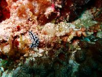 underwater_pictures001