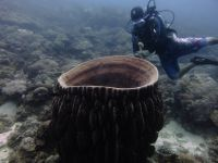 underwater_pictures002