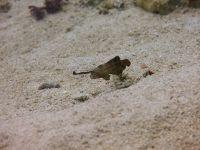 underwater_pictures005