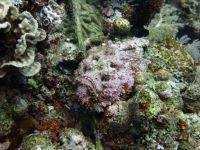 underwater_pictures006