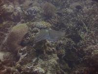 underwater_pictures008