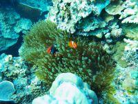 underwater_pictures009