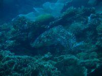 underwater_pictures011
