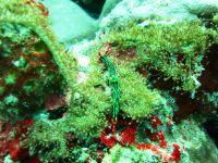 underwater_pictures014