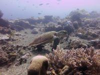 underwater_pictures023