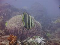 underwater_pictures024