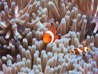 underwater_pictures027