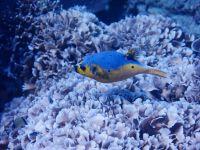 underwater_pictures028