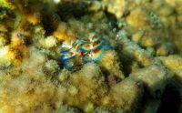 underwater_pictures029