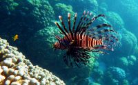 underwater_pictures030